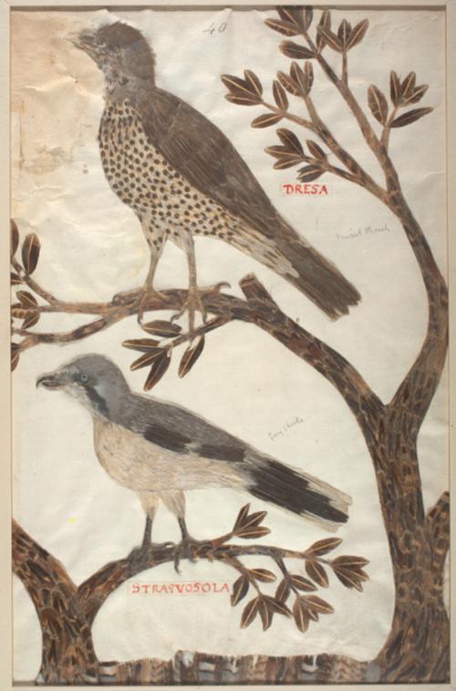The Feather Book, Dionisio Minaggio, 1618, martin brandsma, klapekster